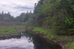 Beaver Area
